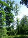 Urwald Deutschland