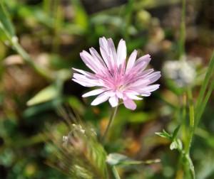 Bild Wildblume