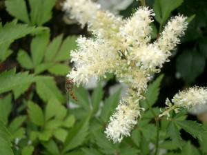 Bild Garten mit Insekt an Blume